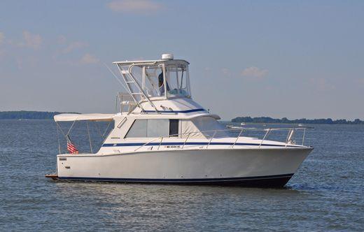 1977 Bertram 33 Flybridge Cruiser