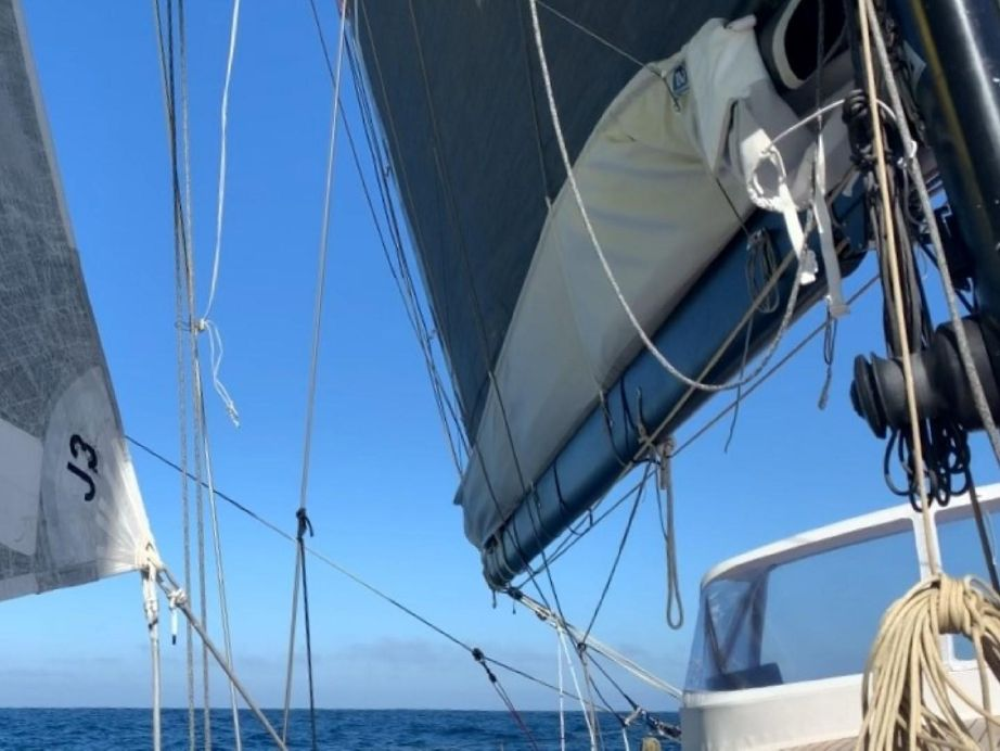 2016 Black Pepper Code 2 Sail Boat For Sale - www yachtworld com