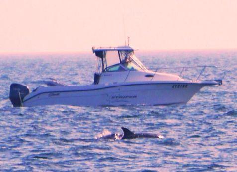 2004 Seaswirl Striper 2601 Walkaround O/B